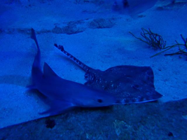 05_Tiburones