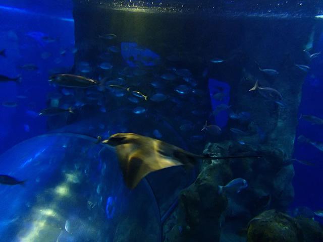 07_Tiburones