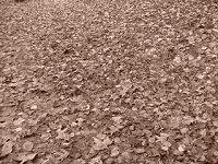 Alfombra de hojas en Otoño