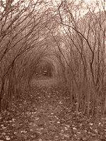 El túnel de arbustos