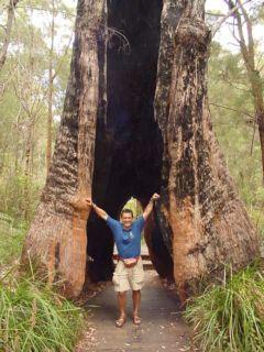 Arboles gigantescos