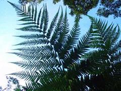 Flora gigante