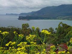 Vegetación en la península de Tasman