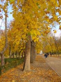 Árboles en Otoño en el Parque del Retiro. Madrid. España
