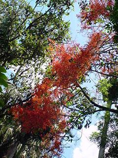 Maravillas del Jardín Botánico