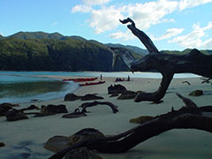 A las islas de Abel Tasman sólo puedes llegar en kayak