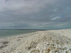 Shell beach, la playa de las conchas