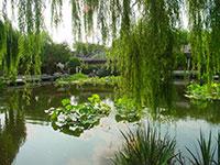El jardin chino de Sydney, un remanso de paz
