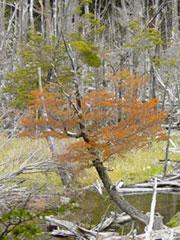 El incipiente otoño ha llegado a Ushuaia