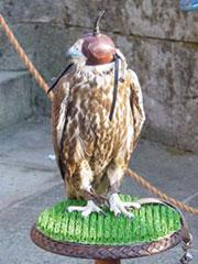 El águila portadora del pregón