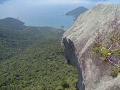 El pico del papagayo asoma en la cima