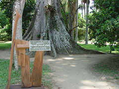 Homenaje a Tom Jobin en el parque