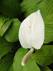 Una hermosa orquídea, símbolo de fertilidad
