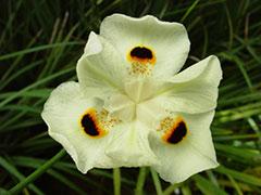Otra hermosa orquídea