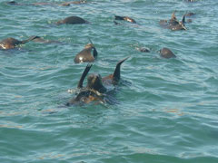 Comité de recepción Isla de Lobos