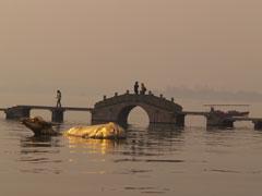 El puente y el buey