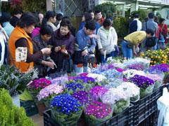 El mercado de flores