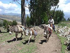 Burros camino de Cumbe Mayo