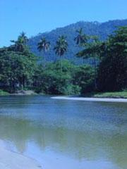 Palmeras, muchas palmeras