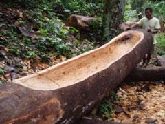 Construcción de canoa