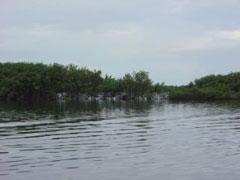 Los manglares de Guaraqueçaba