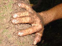 Esto es lo que pasa cuando apoyas la mano en un árbol