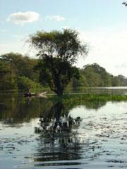 """Tráfico """"intenso"""" en el Río Negro"""