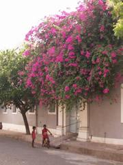 Buganvilla en Pondicherry