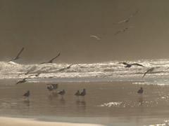 Playa de Sidi Ifni
