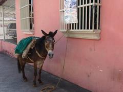 Medio de transporte tradicional en Trujillo