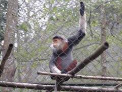 Ninh Binh. Primate