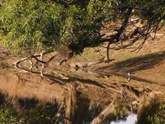 Un cocodrilo tomando el sol a la orilla del lago