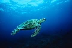 El Parque de la isla de las Tortugas