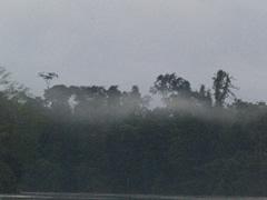 Neblina en el río