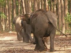 En fila india (de elefantes)
