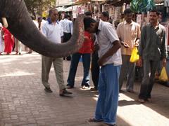 La bendición del elefante