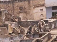 Asamblea de monos en la azotea