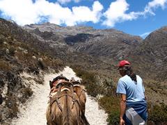 Las mulas y el Chino