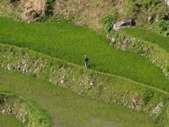 Terrazas de arroz en Sagada