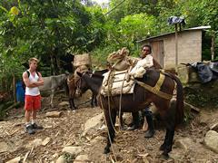Cargando las mulas