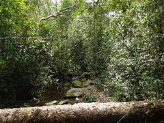 Senderos arbóreos