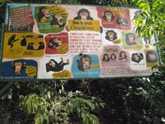 Como aprender chimpancé