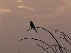 Pájaro al atardecer