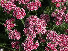 Flores en el Khecheopalri