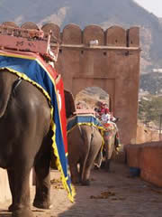 Hasta los elefantes circulan por la izquierda en India