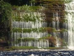 Precioso efecto de la vegetación y el agua