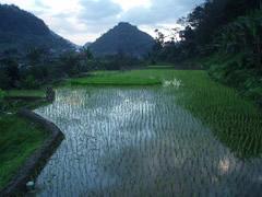 Terrazas de arror en Benaue
