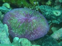 Colores Corales