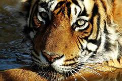 ..y el tigre que no vi (foto cortesía de Jose Lourido)