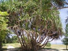Vegetación en Gili Air